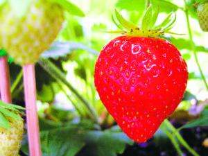 Gardening_June_060116B