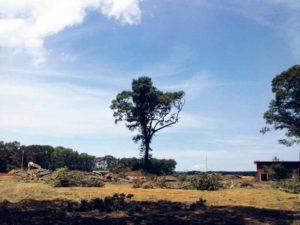 TreesMeet_092816B